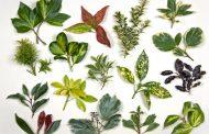 Sejarah dan Perkembangan Taksonomi Tumbuhan